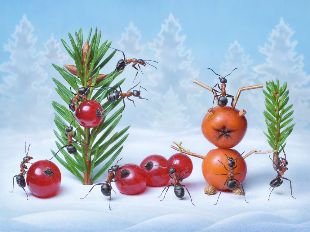 Bug Off! How to Keep Your Christmas Tree Ant-Free