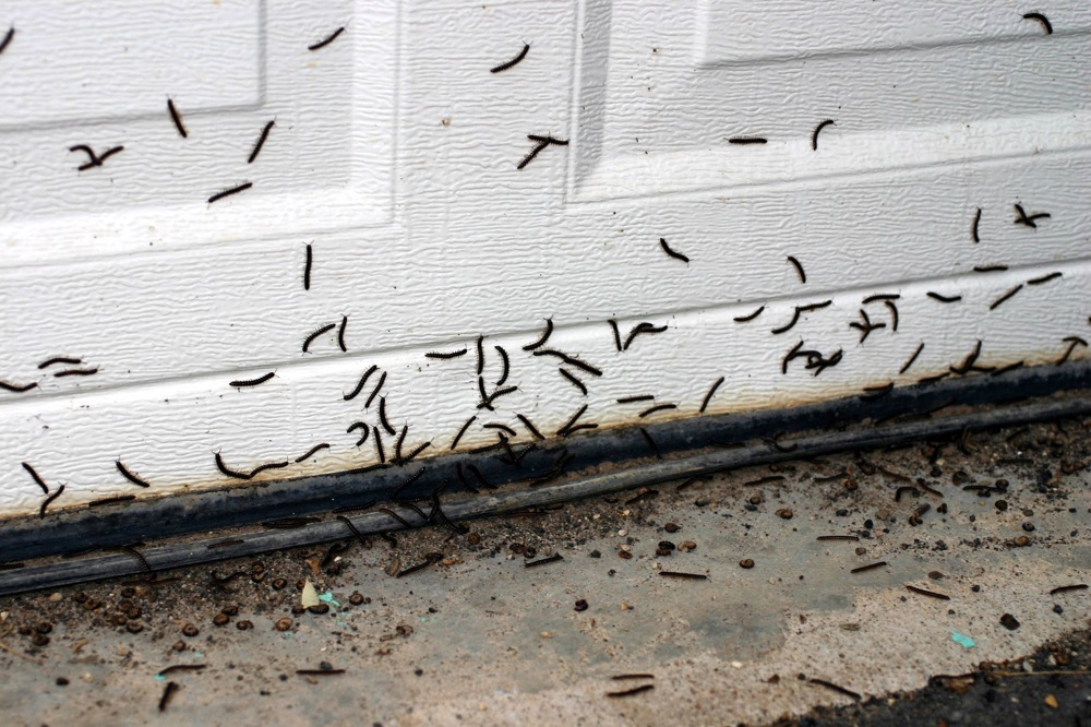 get-rid-of-millipedes