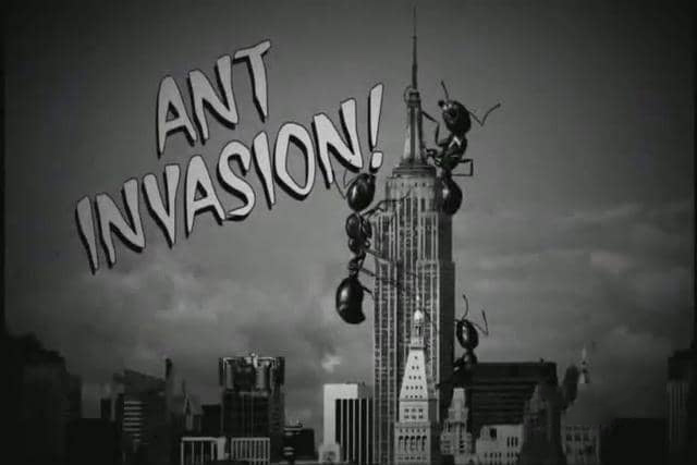 Invasion of the Ants!