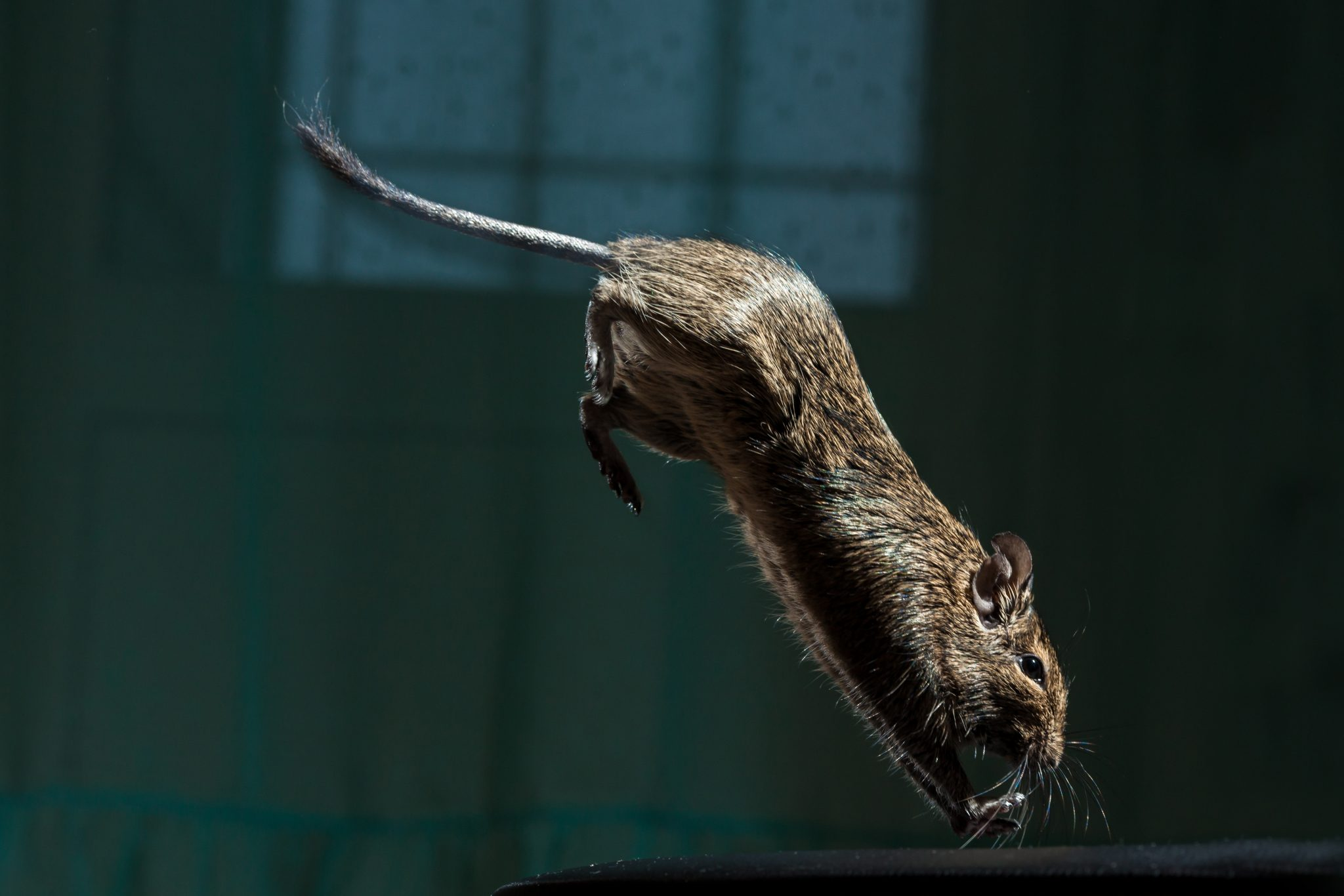 rodents-ruin-your-home