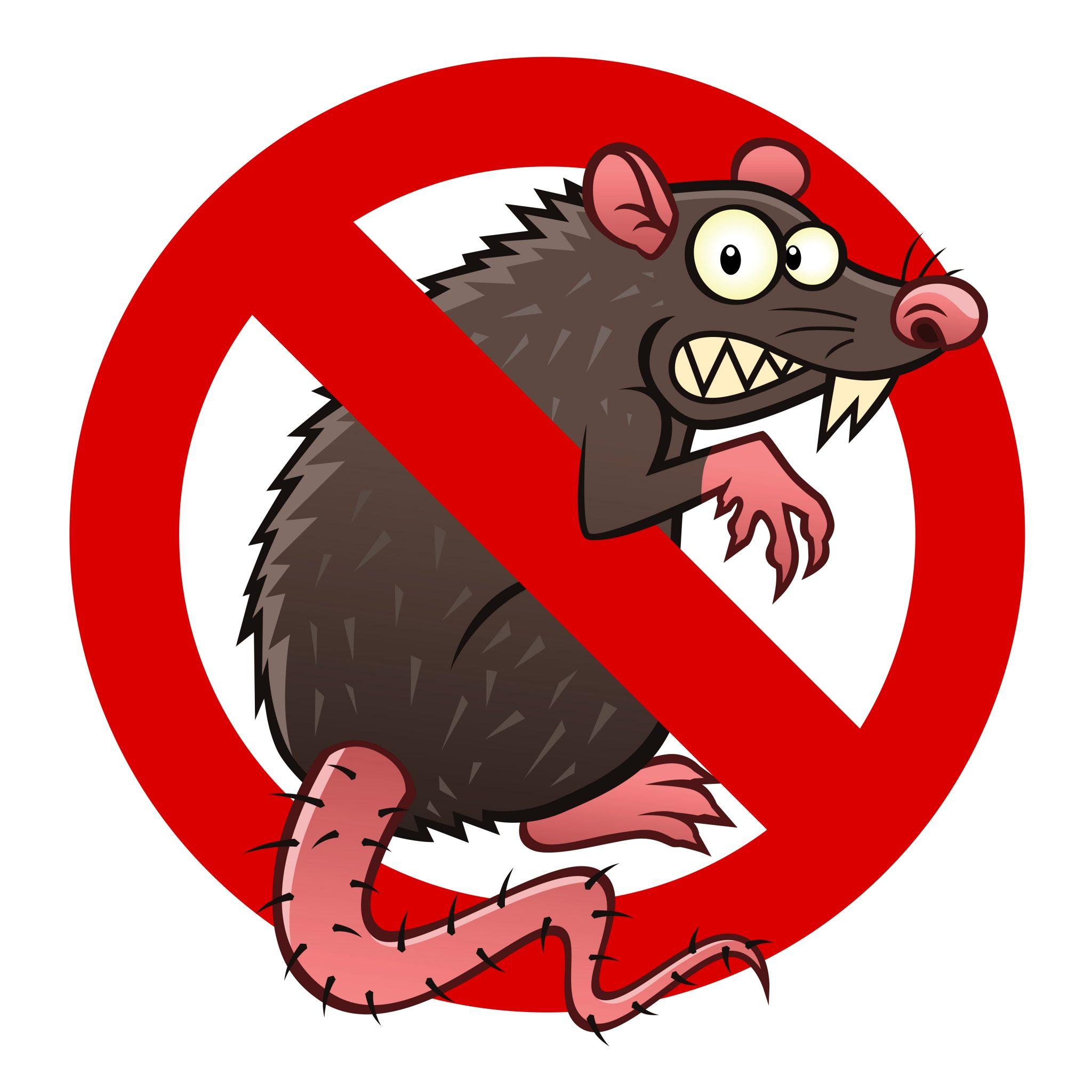 serial-killer-or-cereal-eater-the-rat-dilemma
