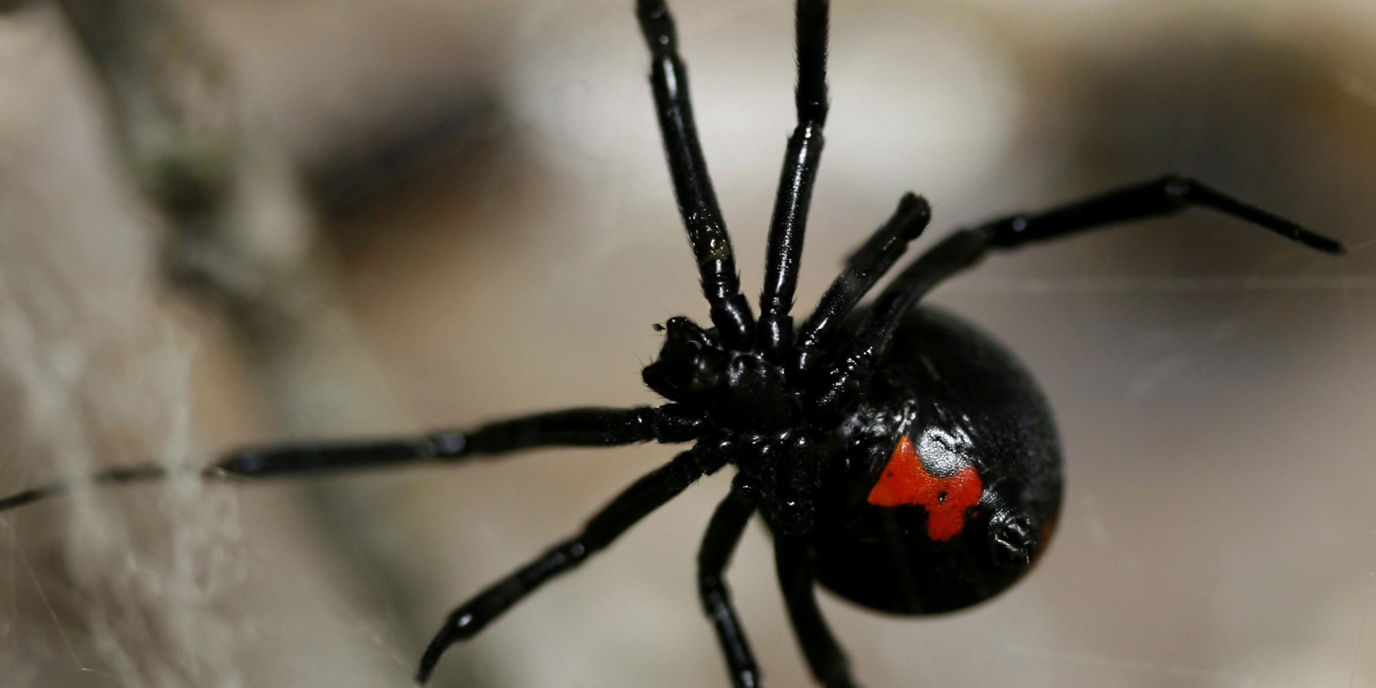 Spider Infestations Kelowna, Vernon, and Penticton - Everything that Creeps and Crawls