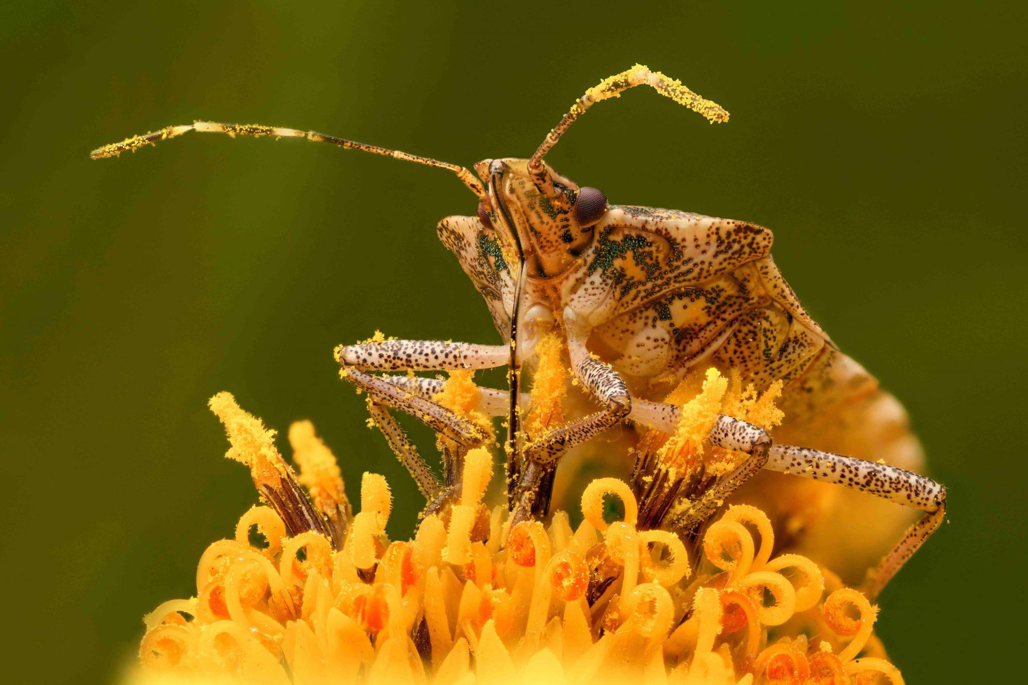 Pest Control Tips in Kelowna: Yard Maintenance Tips that Keep Pests Away